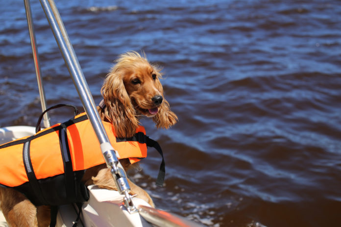 Choosing the right lifejacket for your dog