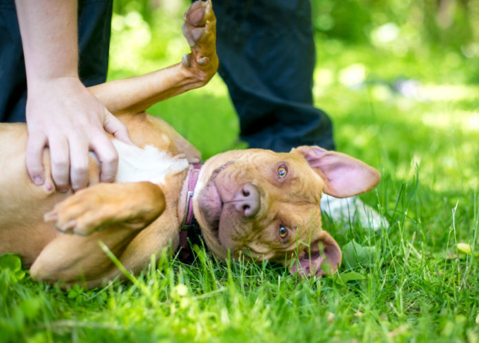 How your dog's gut microbiome affects his behavior