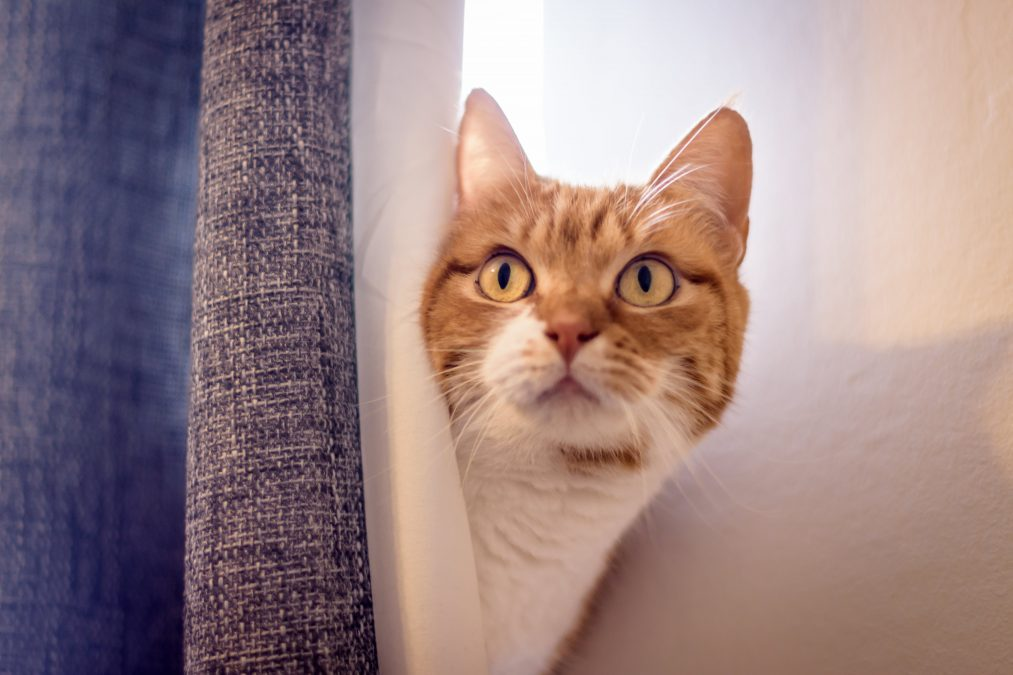 a cat peeping its head from behind a curtain