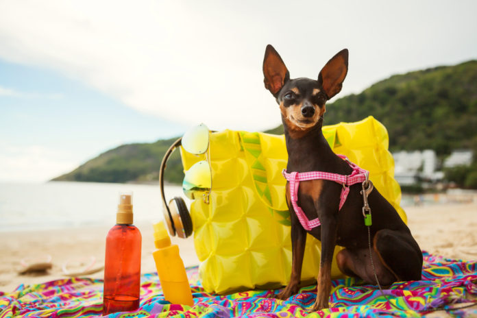 Top tips to protect your dog from the sun